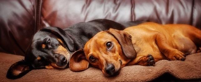 housemate dogs.jpg