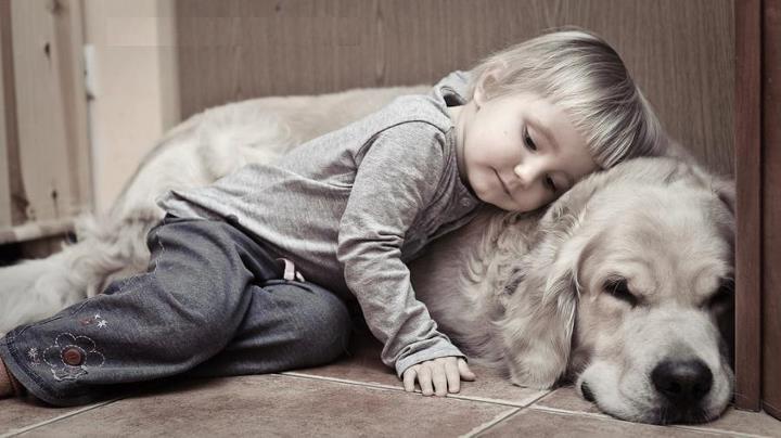dog child sad.jpg