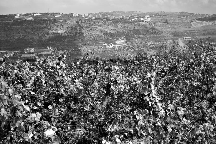 Iris Domain, Btalloun, Libanon