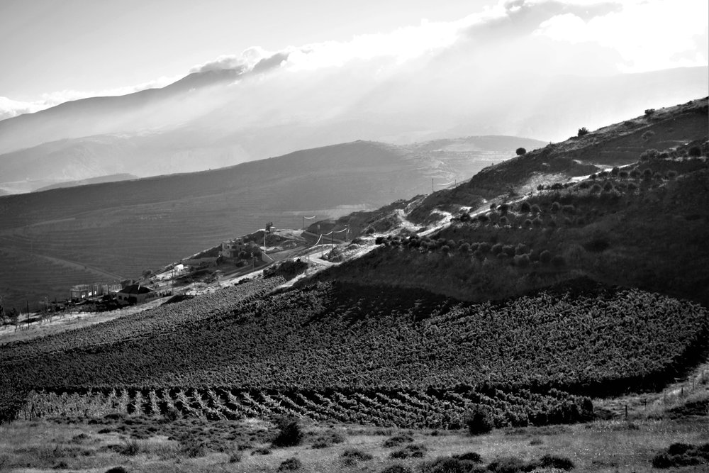 Rebberge, Khoury, Libanon
