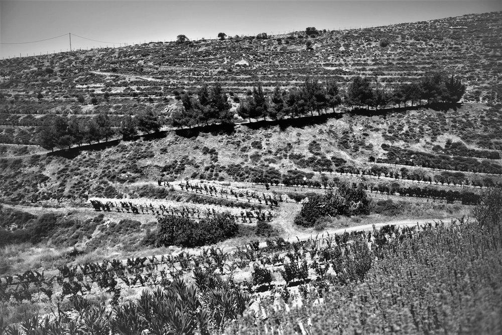 Rebberge, Domaine de Baal, Libanon