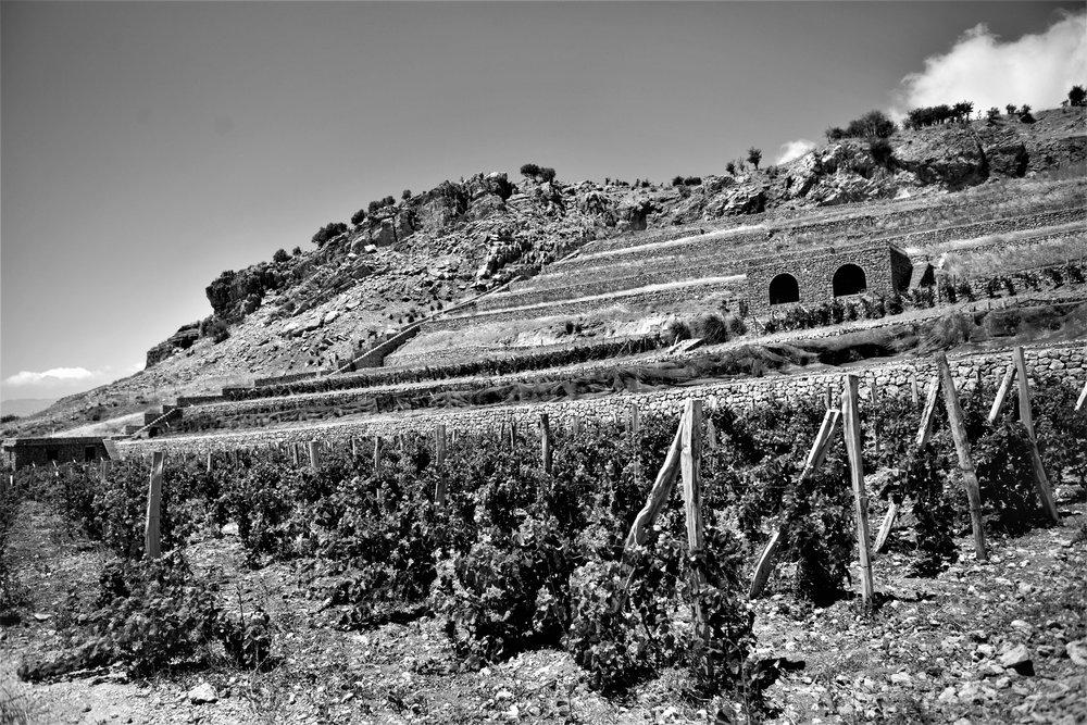 Die neuste, und höchste, noch nicht vollständig bestockte Anlage für Pinot Noir auf 1650 Metern über dem Meer (Vertical 33).