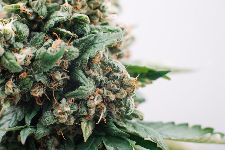 cannabis 101 -