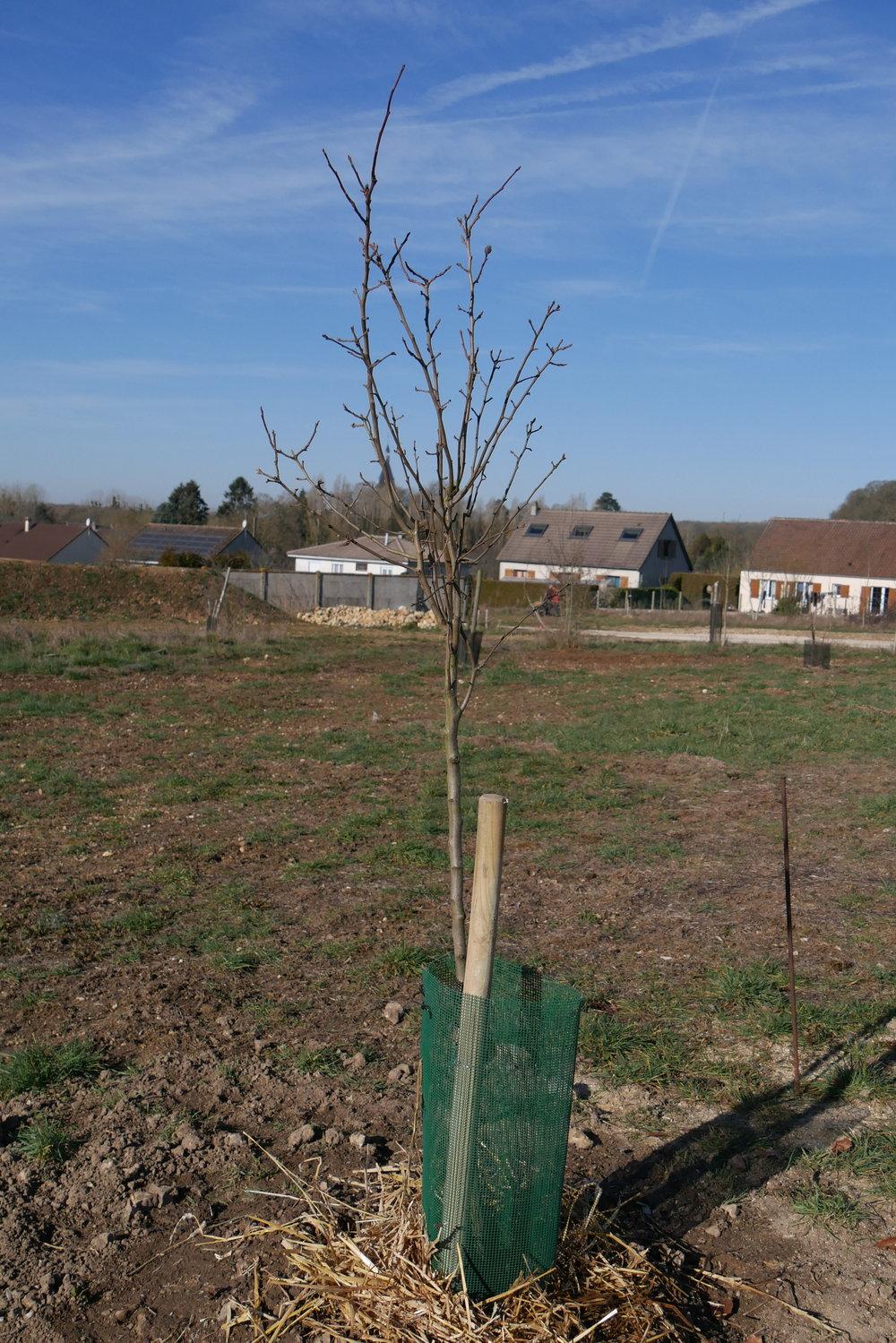Il tuo albero deve ancora essere piantato