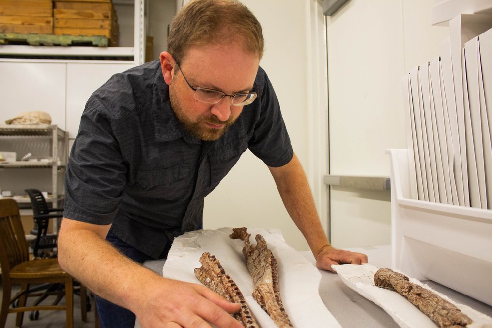 Back at the museum, is where the real research begins. Here, Irmis can analyze different phytosaur and Triassic fossils. Photo by Lauren J. Young