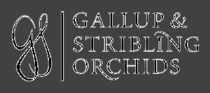 Gallup & Stribling Orchids - Explore and shop M-F 8:30-5, located in beautiful Carpinteria, California.