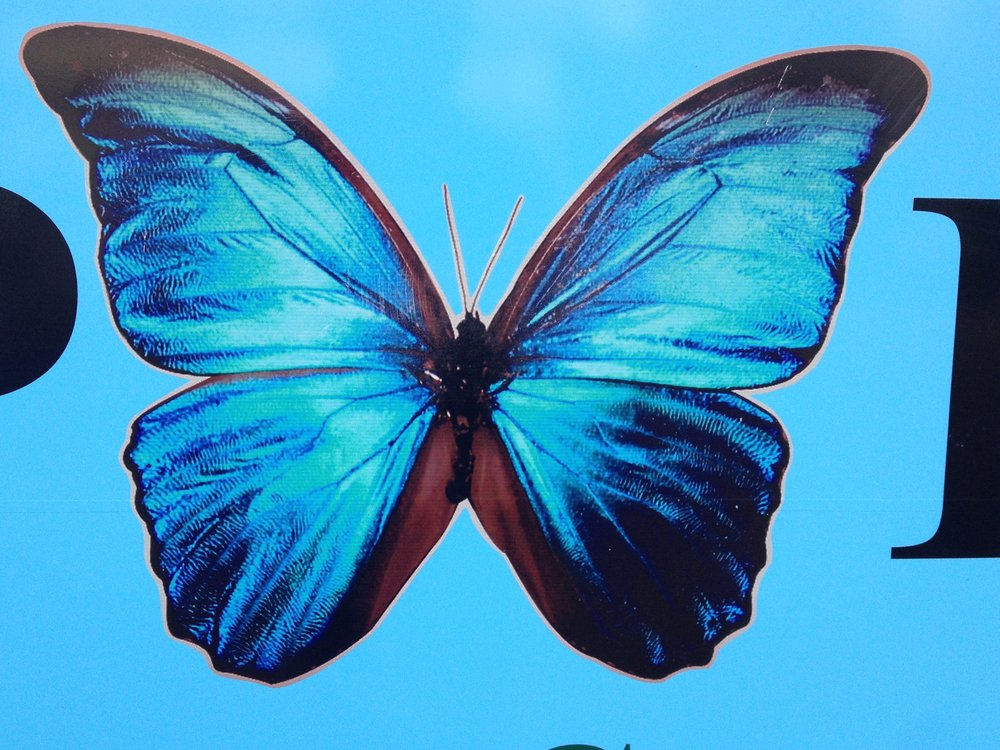 santa-catalina-butterfly.jpg