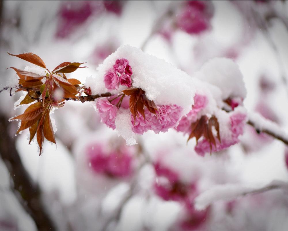 snowflower.jpeg