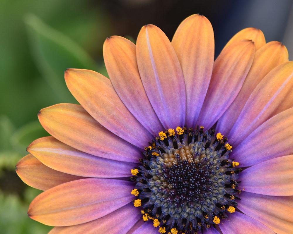 Tinyflower.jpeg