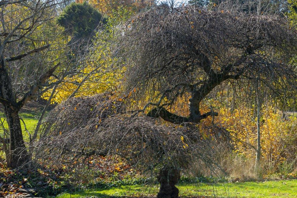 behindthetreemorris.jpg