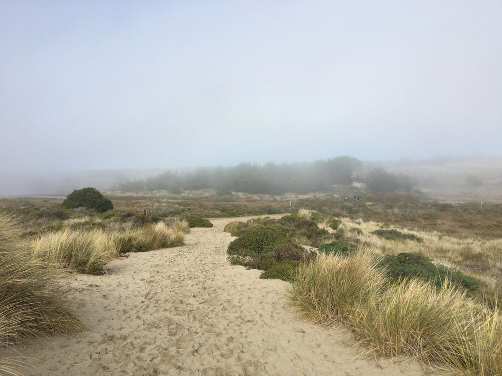 A misty path along the Northern California coast. Picture taken by me.
