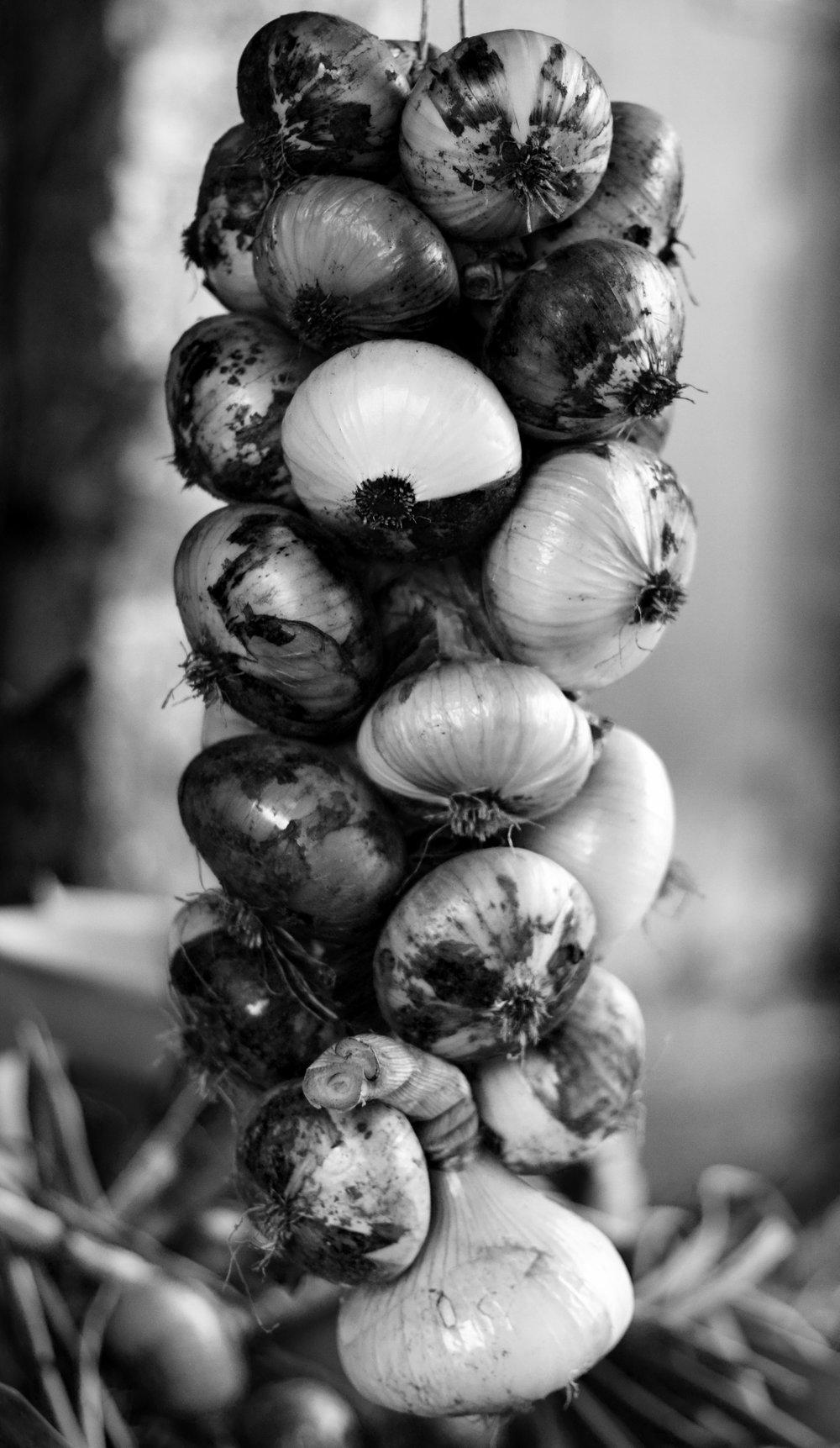 IMG_4758 onions.jpg