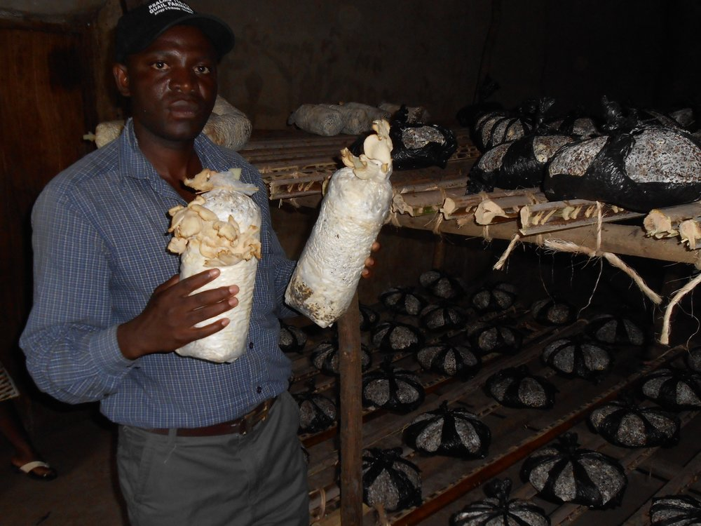 We sponsored this mushroom project - funds support the Katumba Humanist Primary School in Uganda