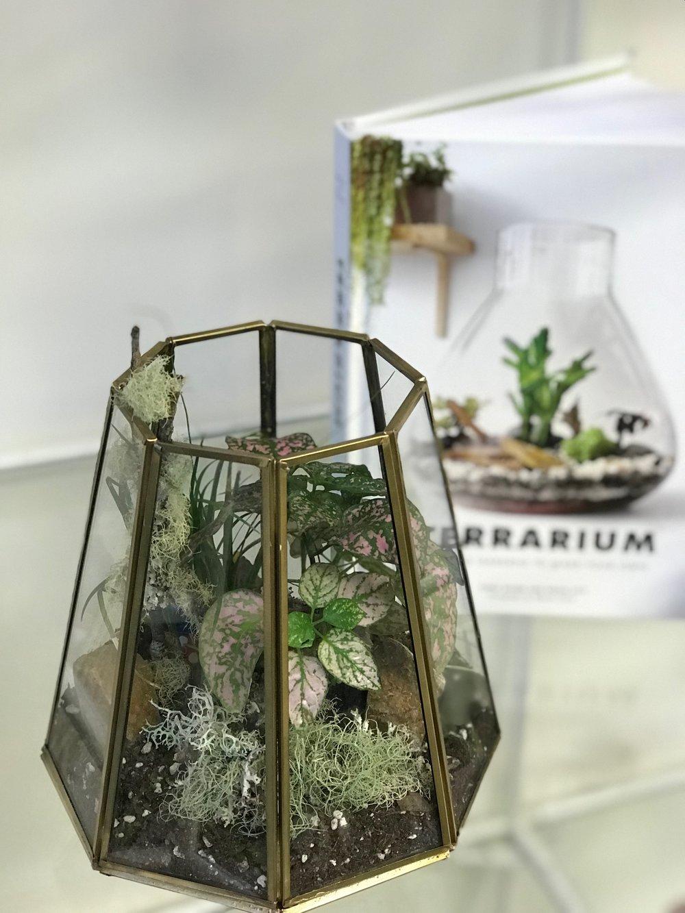 Terrariums - Creating a closed environment can create an ecosystem in a beautiful desktop garden.