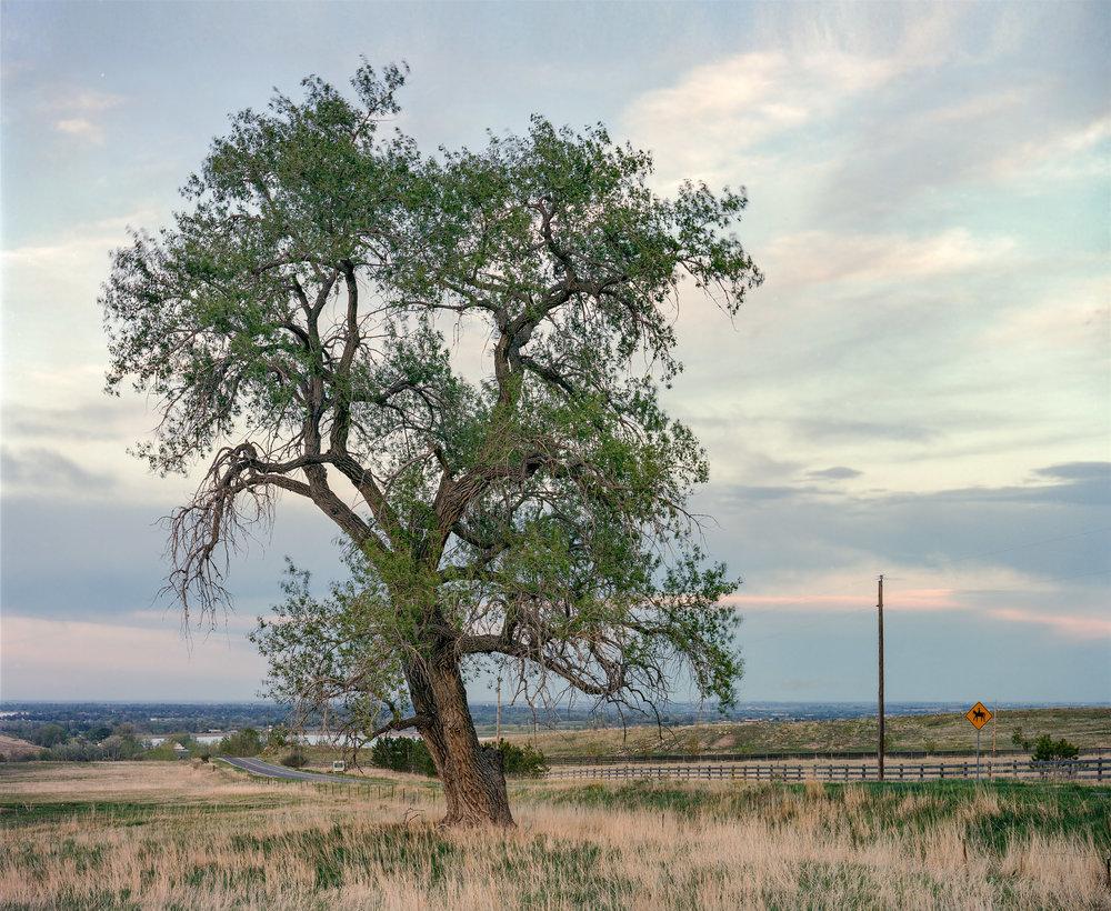 Highway Arbor along the Front Range, Colorado