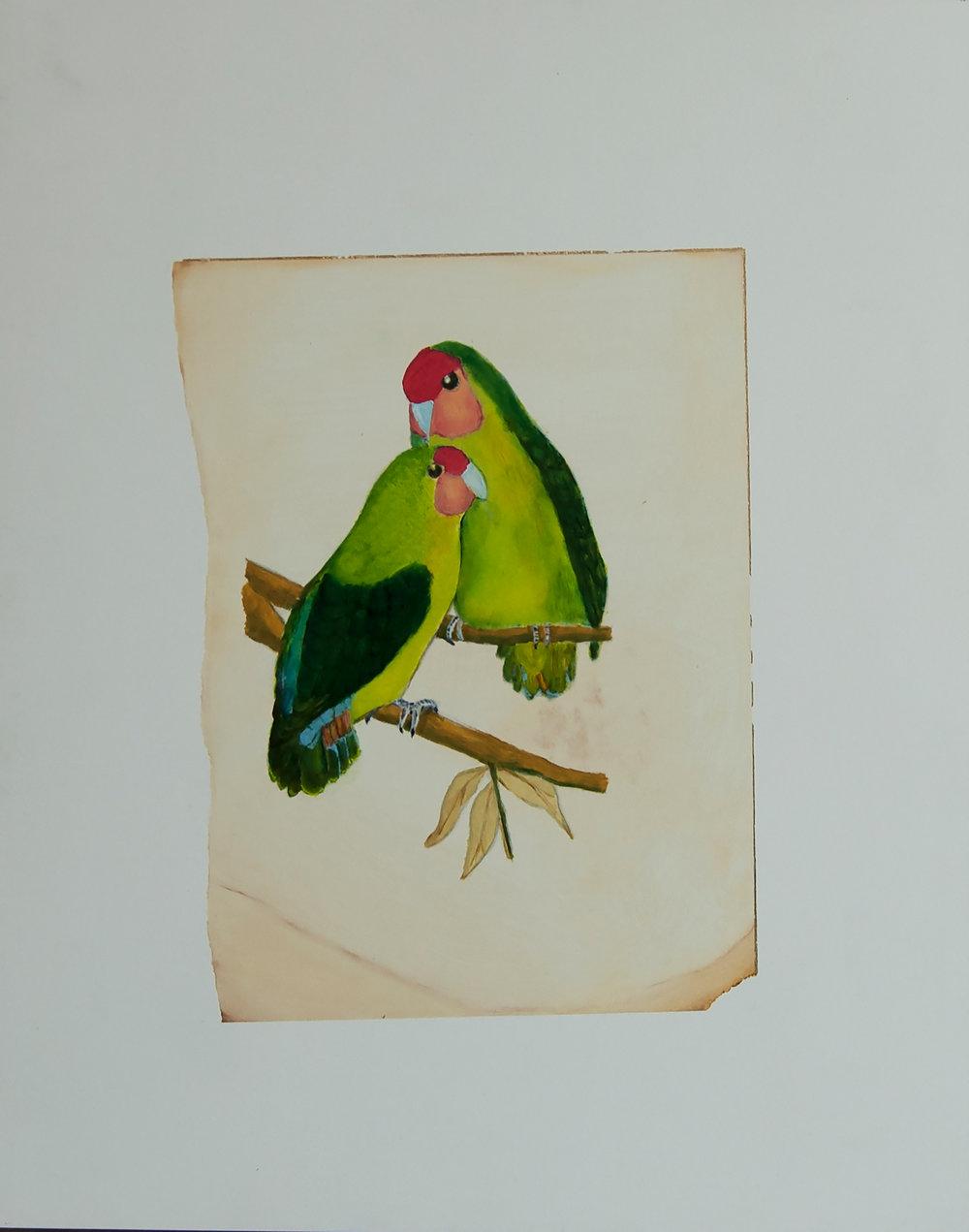 Rosey-Headed Love Birds
