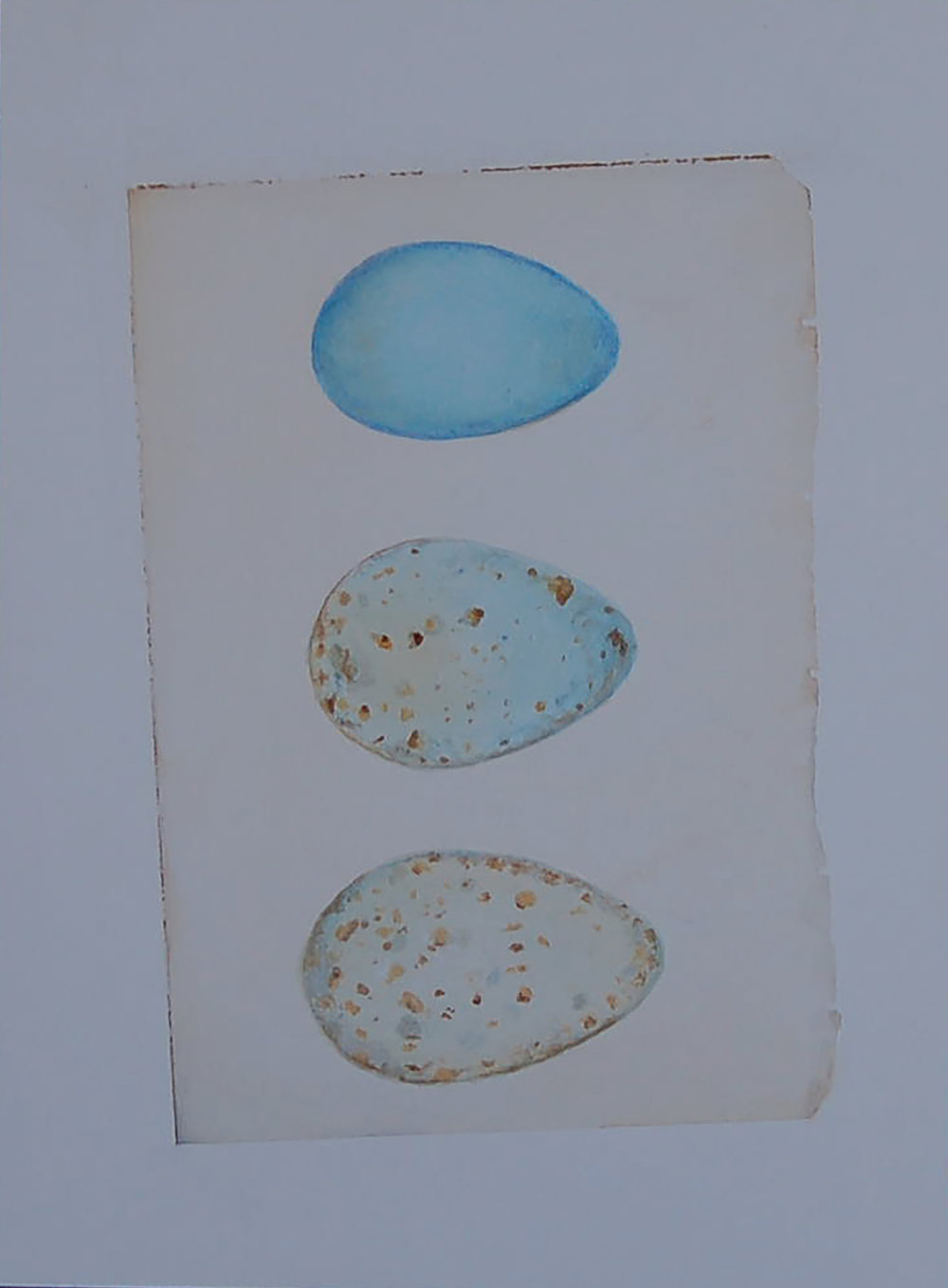 Three Speckled Eggs