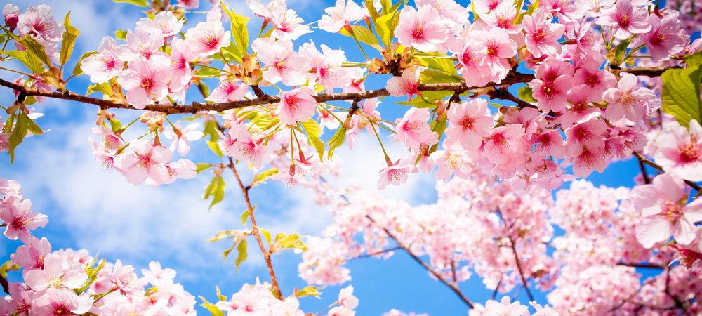 spring-equinox.jpg