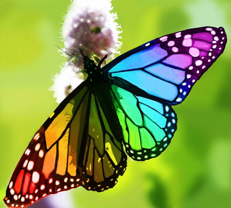 rainbow-butterfly.jpg