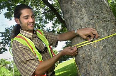 tree measuring.jpg