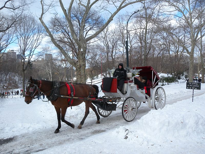 800px-snowy_carriage_ride_cp_jeh