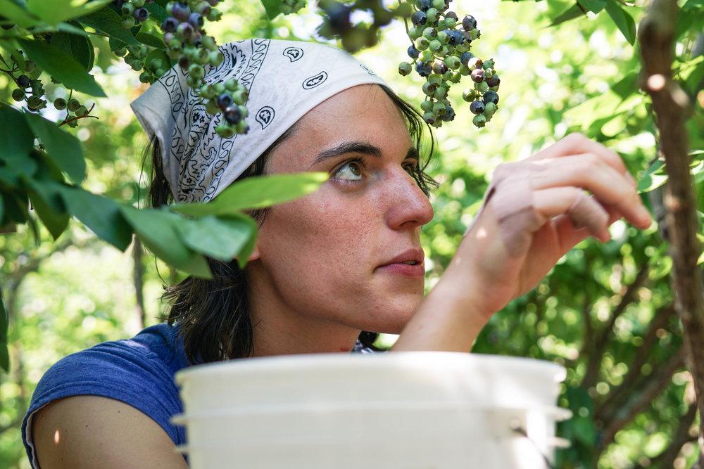 Blueberry Picking Adventure
