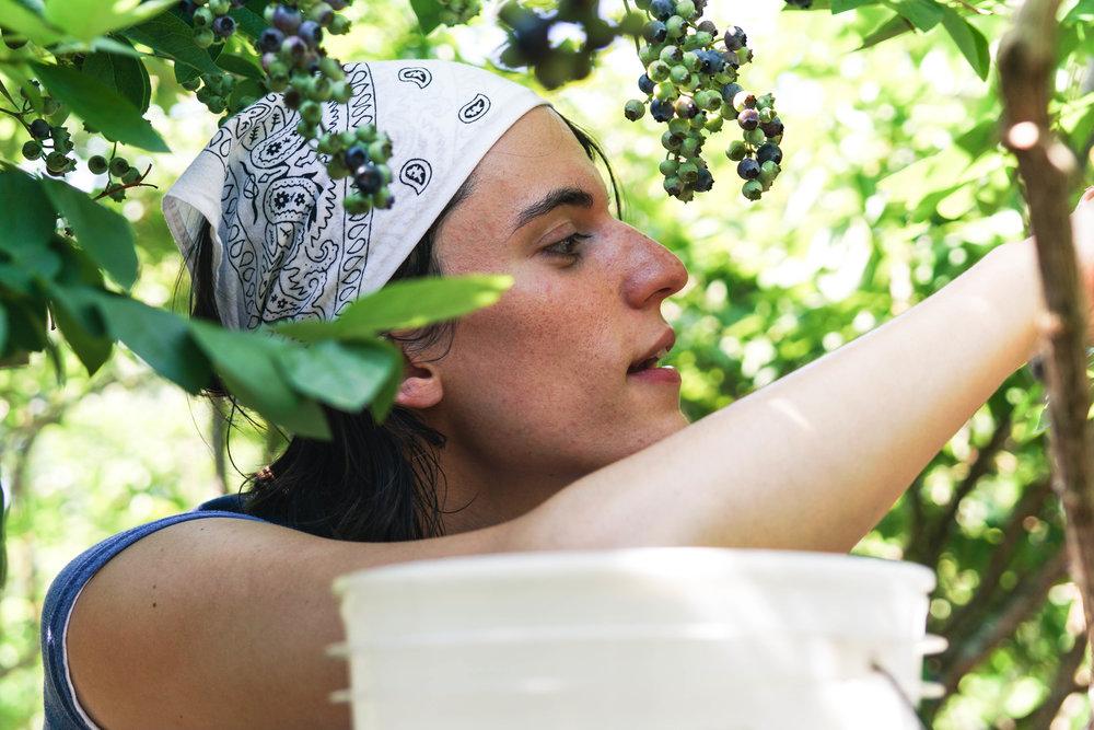 Blueberry Picking Adventure-7.jpg