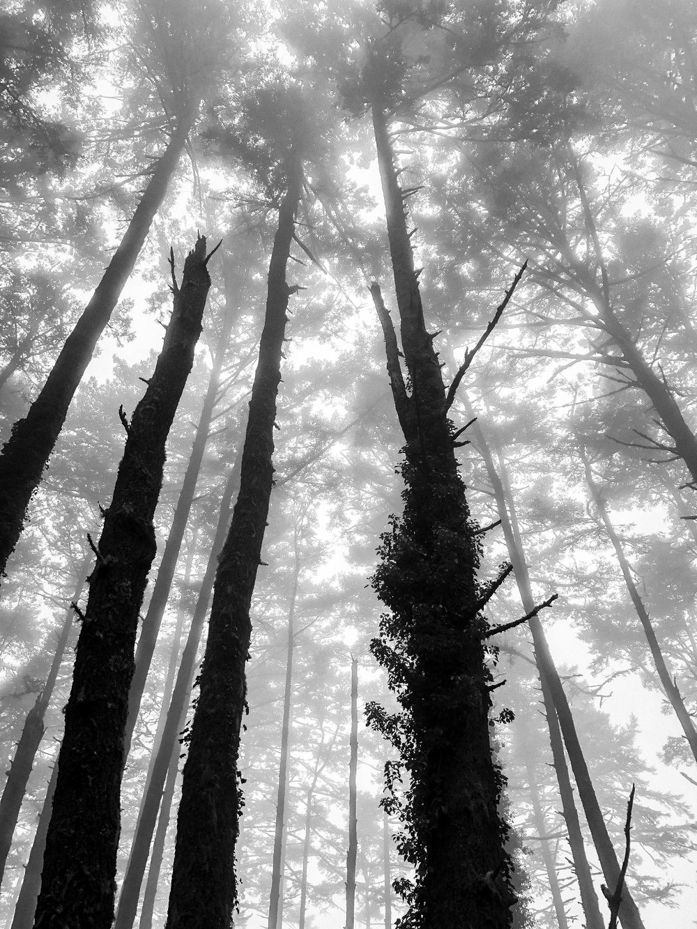 Tree Magic-2.jpg