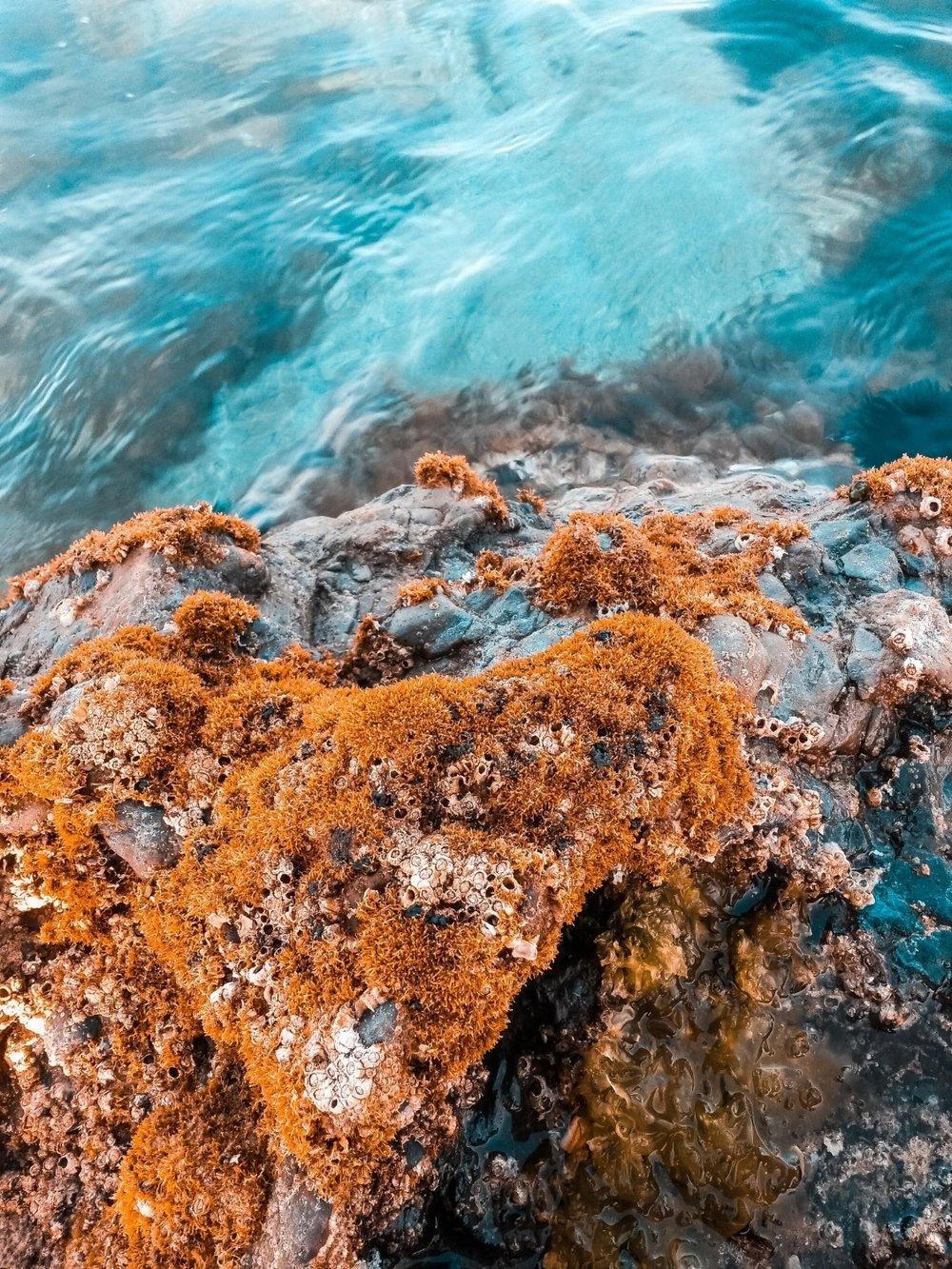 algae-color-marine-1281670.jpg