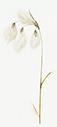 js-bog-cotton-adj-new_web copy.png
