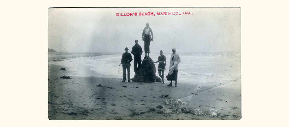 """Real Photo Postcard"" of people at Dillon's Beach (early 20th century)"