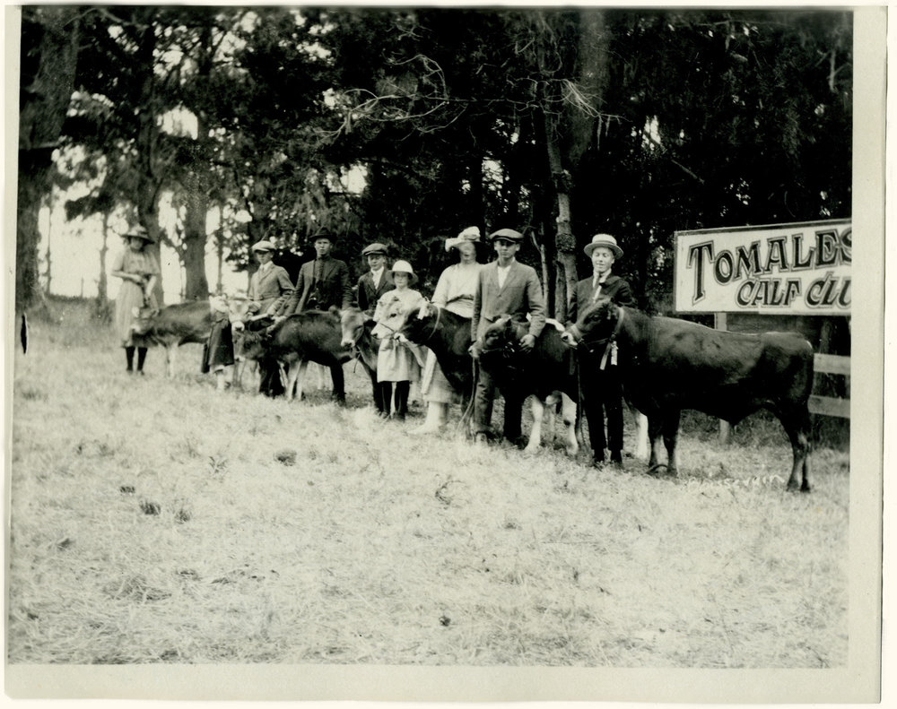 A 1921 Tomales High School Calf Club event. The club operated at the school before the FFA chapter was formed in 1929.