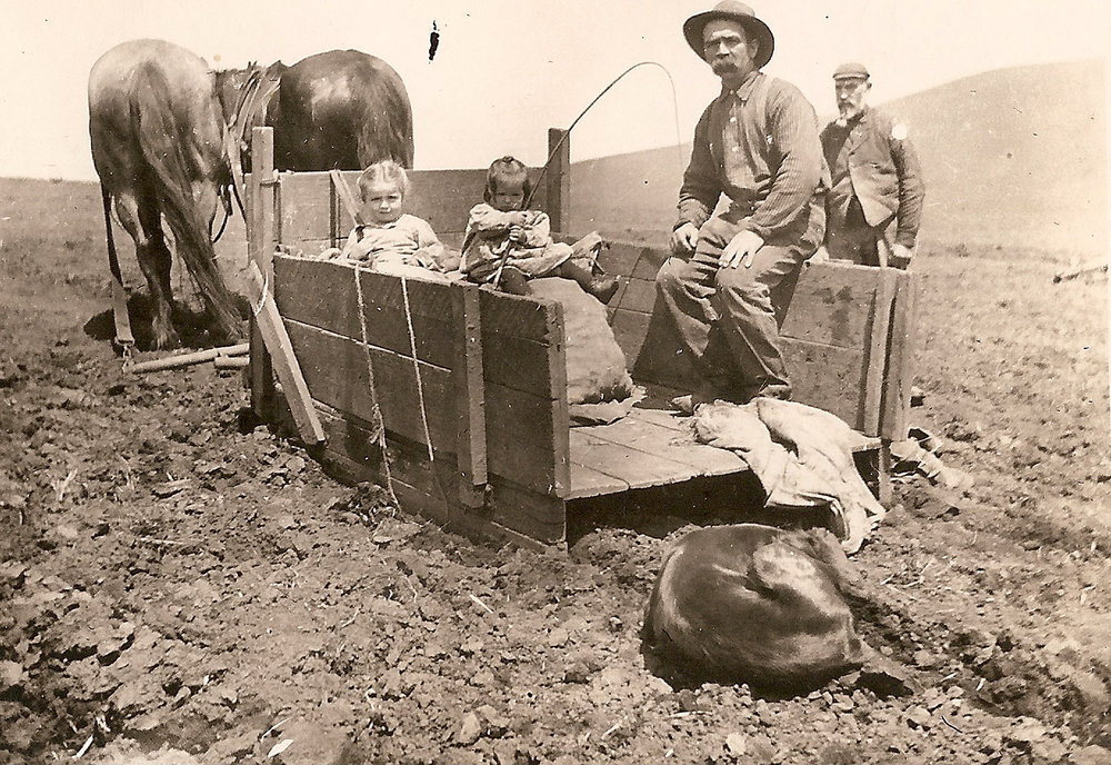 A. D. Hopkins with daughters Doris and Annie, harvesting potatoes near Tomales, circa late 19th century.