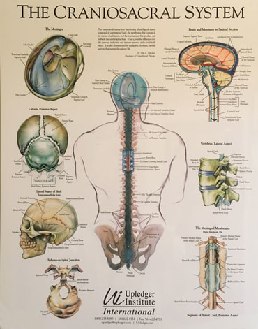 craniosacral-therapy-poster_1.jpg