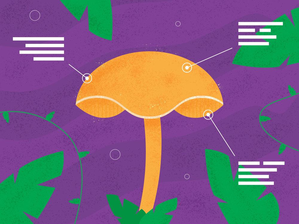 Psillow-Header-1980x1485-Mushroom-01.jpg