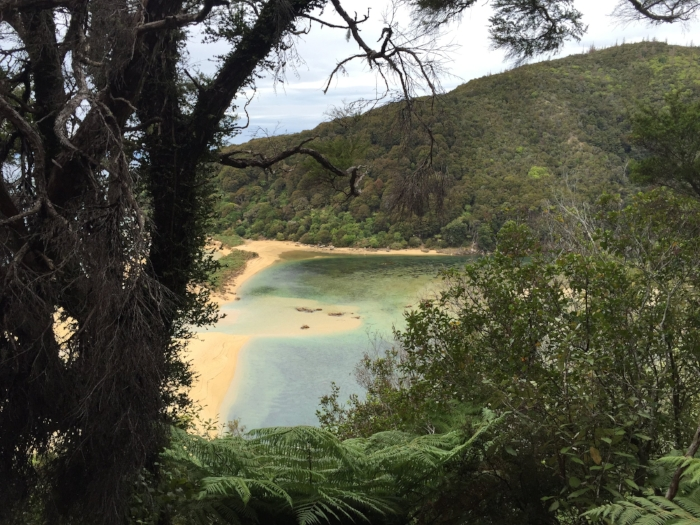 Abel Tasmanの中にあるSandfly beach。なんて嫌な名前なんや!て思ったけど、めっちゃキレイだったしsandflyも全然いなかった。あれ??