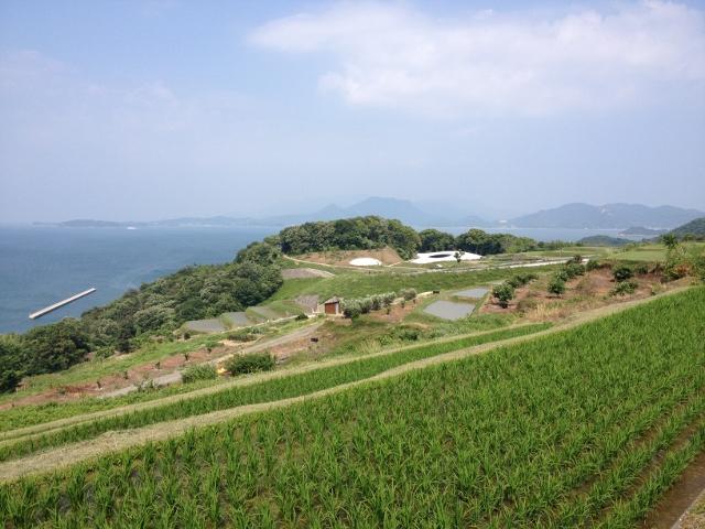 棚田側から豊島美術館を望む