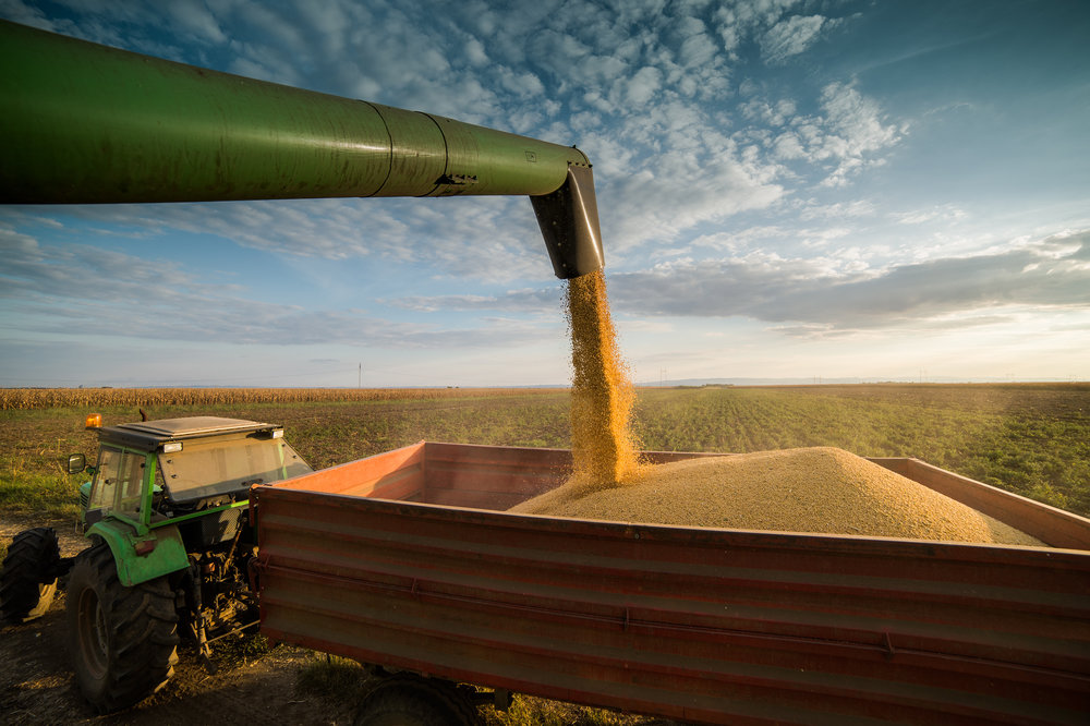 How RTRS offers access to responsible soy -