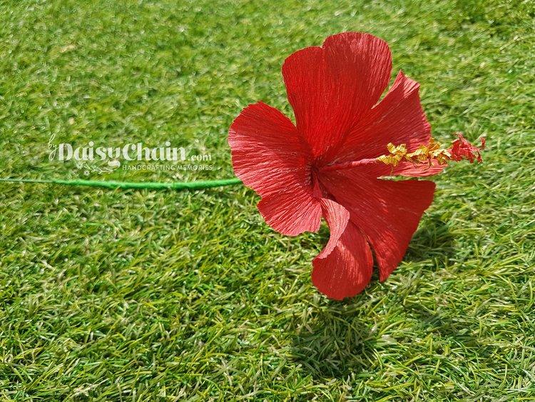 Hibiscus Flower Sample Bydaisychain
