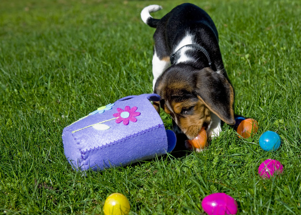 Dog Egg Hunt.jpeg