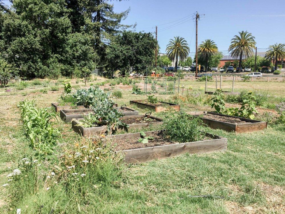 VillagePark_garden3-2.jpg