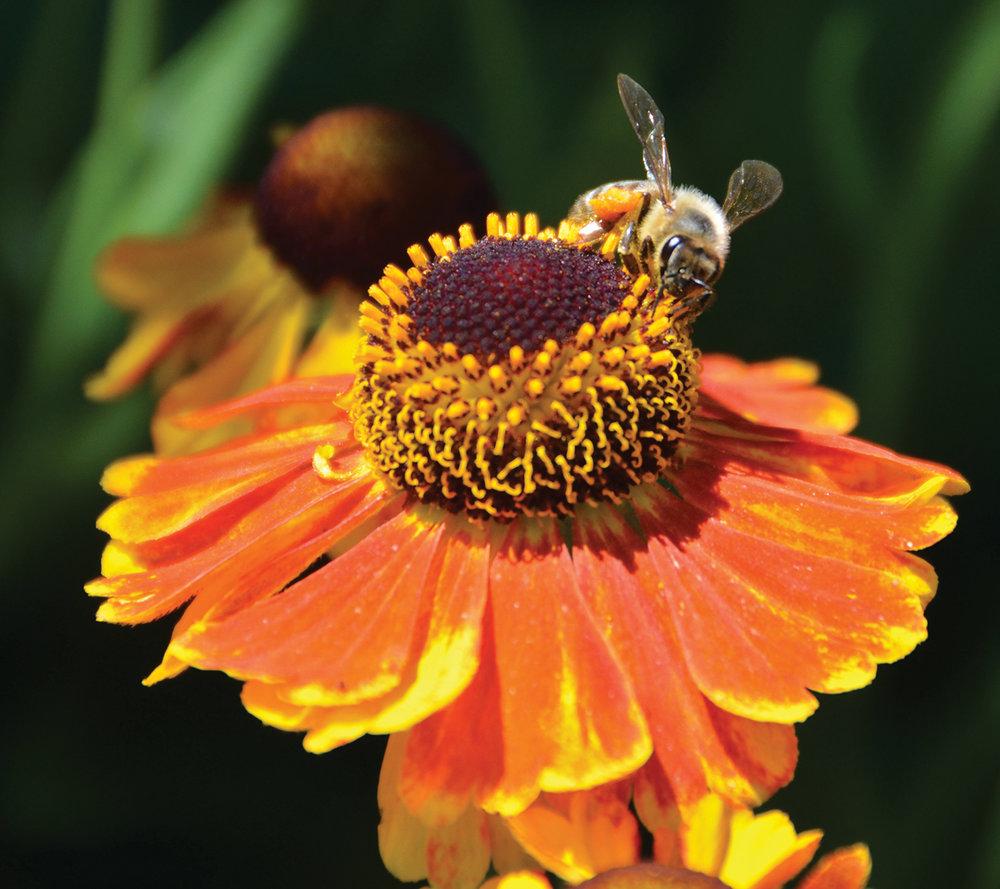 Photo courtesy of the Coastal Maine Botanical Gardens