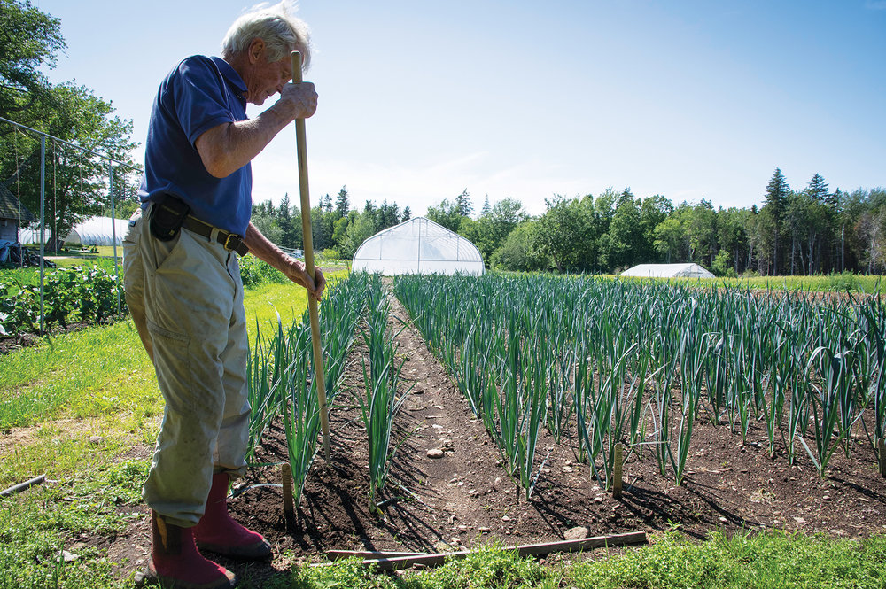 """Eliot Coleman on his farm in Harborside. Hoop houses (also called a """"high tunnel"""") like the one in the background are available to homesteaders and home gardeners interested in larger scale garden season extension. Photo: John Finch"""
