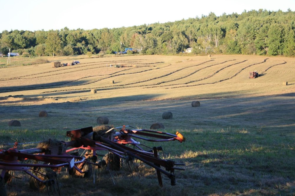 "A hay field in Woolwich. Hay fields provide the perfect canvas for creating permaculture ""food forests."""