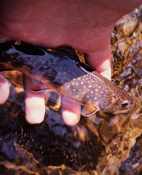 Photgraphy Courtesty of   @robyaskovic    -  Keep on fishing Rob!