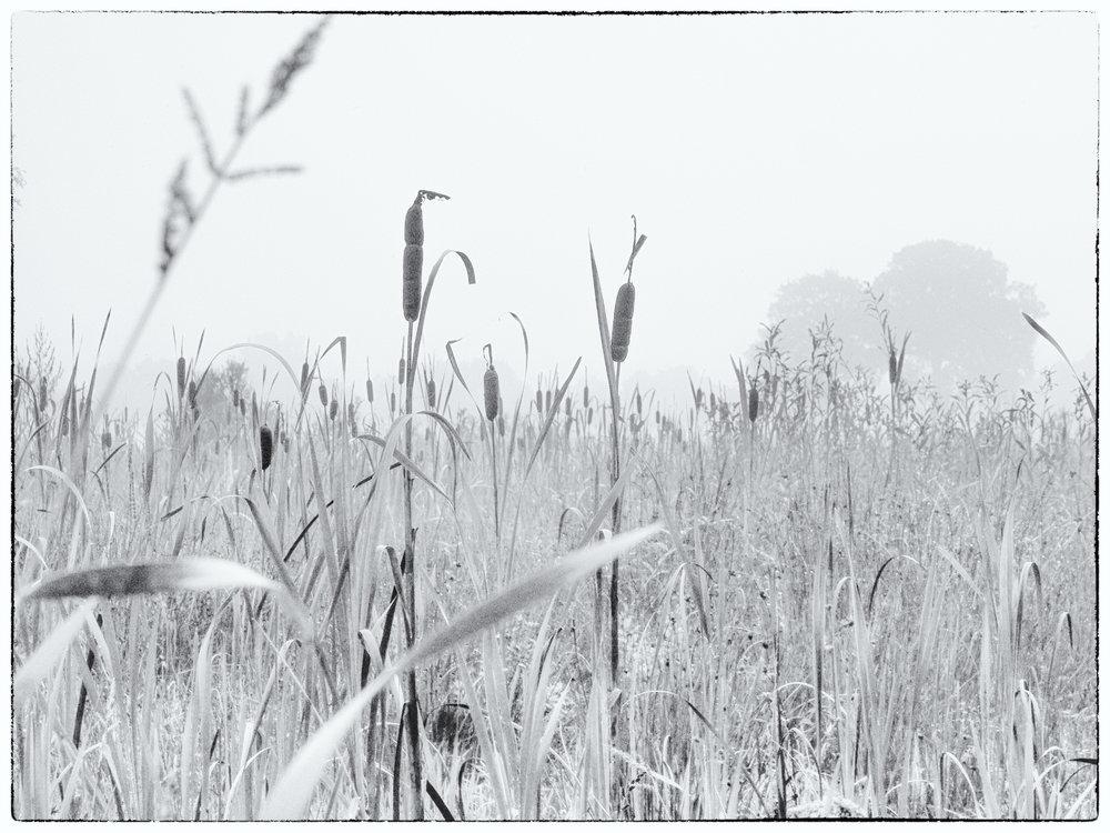 De grasgebieden tussen Heeten en Haarle