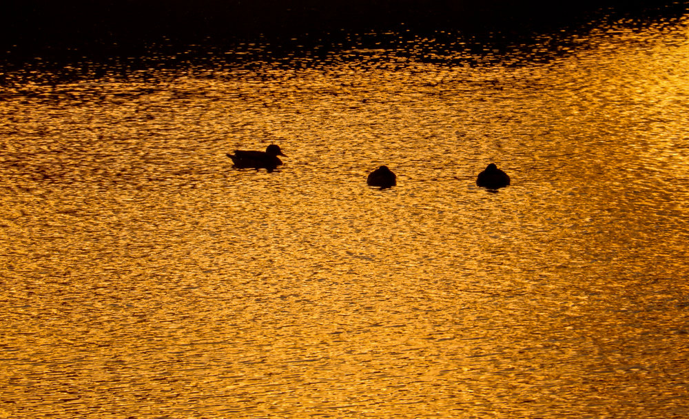De IJssel bij zons ondergang