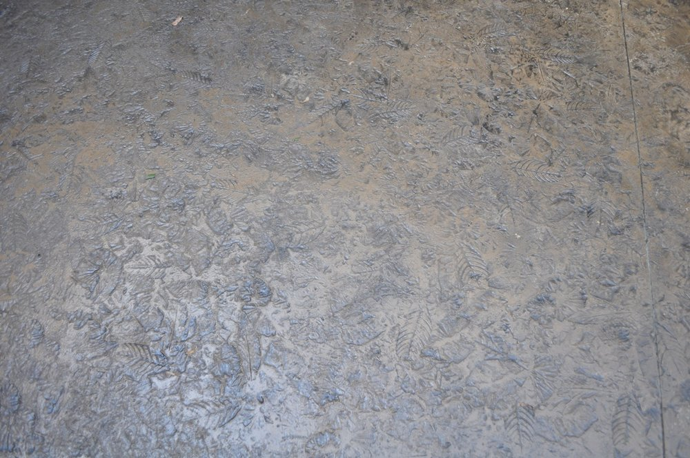 Forest Floor Texture, Mesa Buff color, Charcoal Gray release