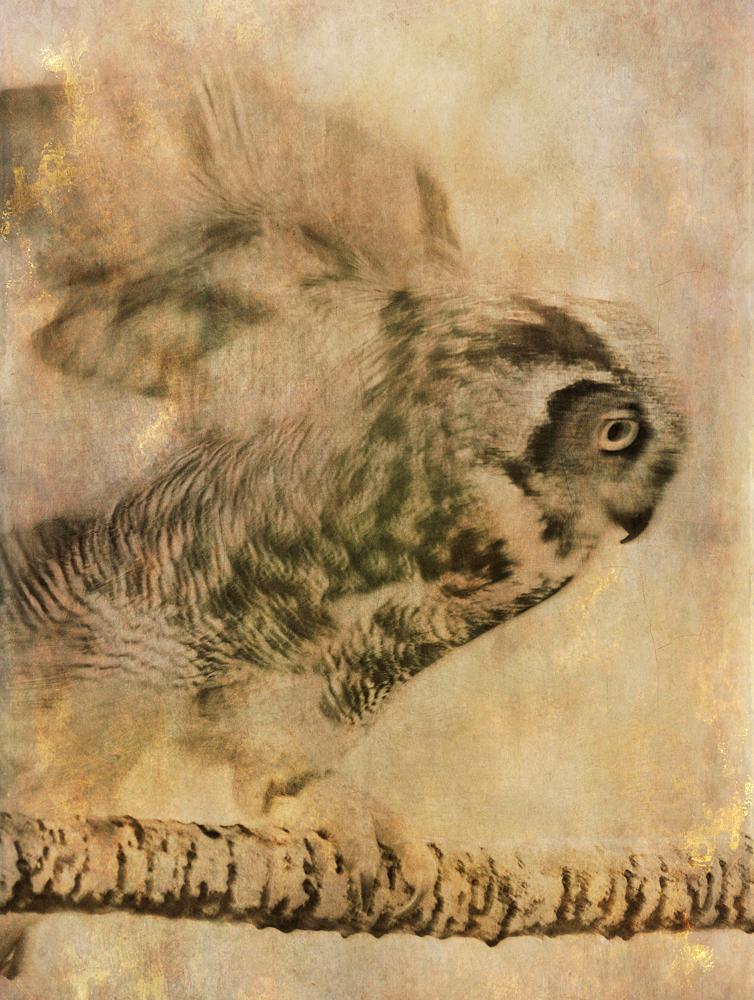 wendi-schneider-chimerical-owl-A4A1.jpg