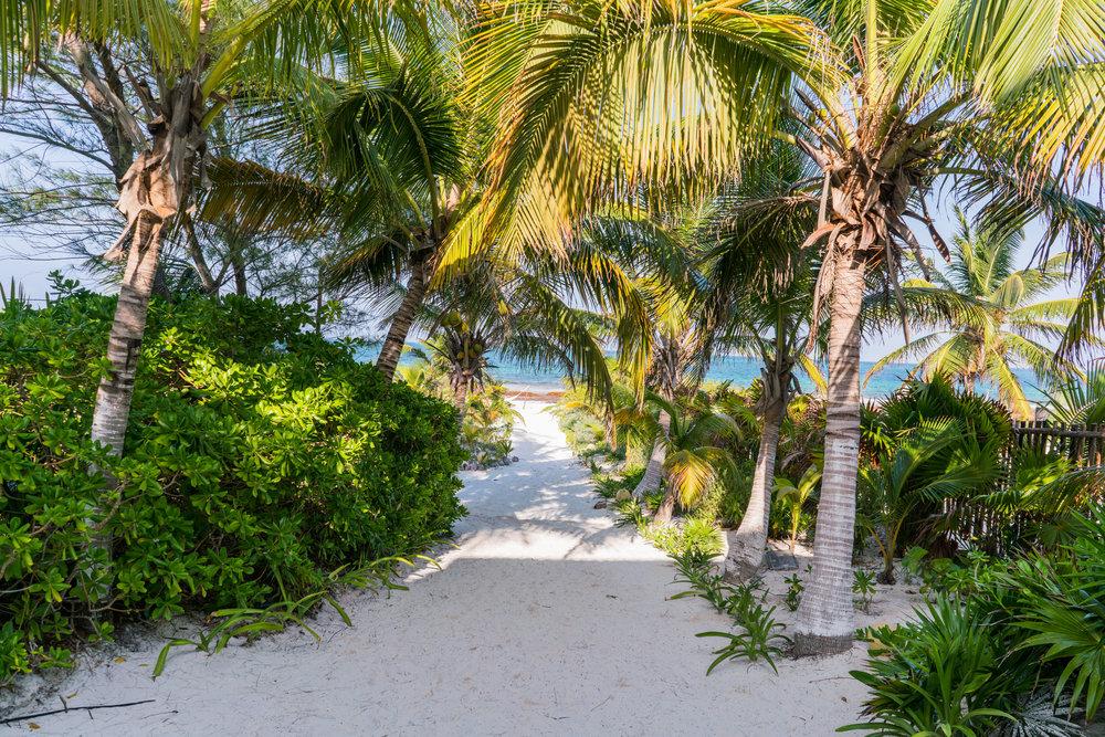 SAND + JUNGLE PATHS TO THE BEACH